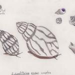 Snail Chimera