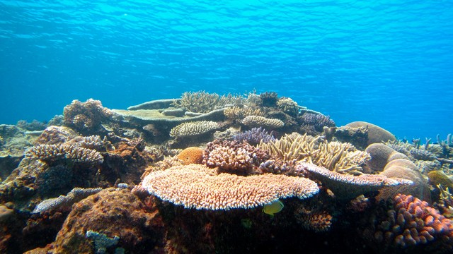 How do reef protection and overfishing affect a coral's ...