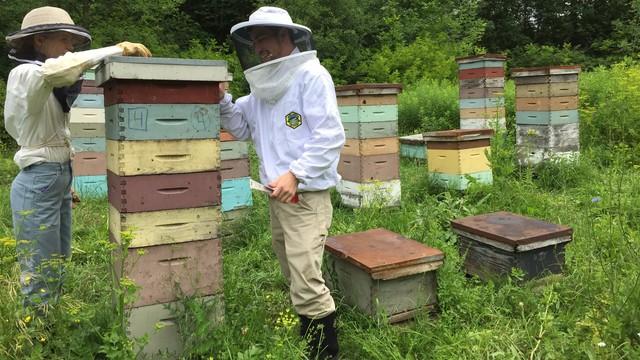 Home sick: Effects of migratory beekeeping on honey bee disease ...