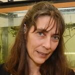 Elke Buschbeck