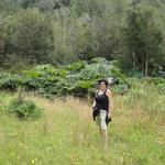 Avecita Chicchon