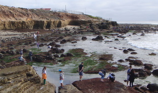 How can we better protect the biodiversity of the rocky intertidal zones?